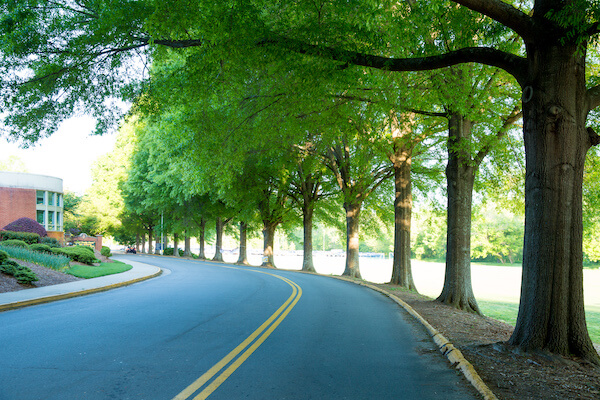 Ivy Street tree-lined drive